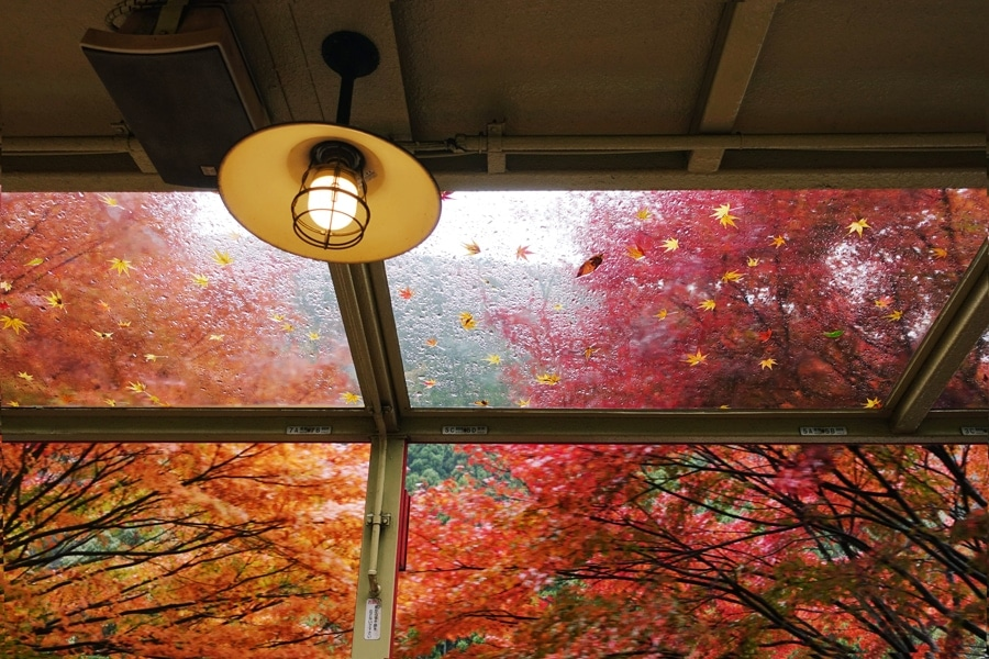 Shot inside an old train in autumn maples in Kyoto