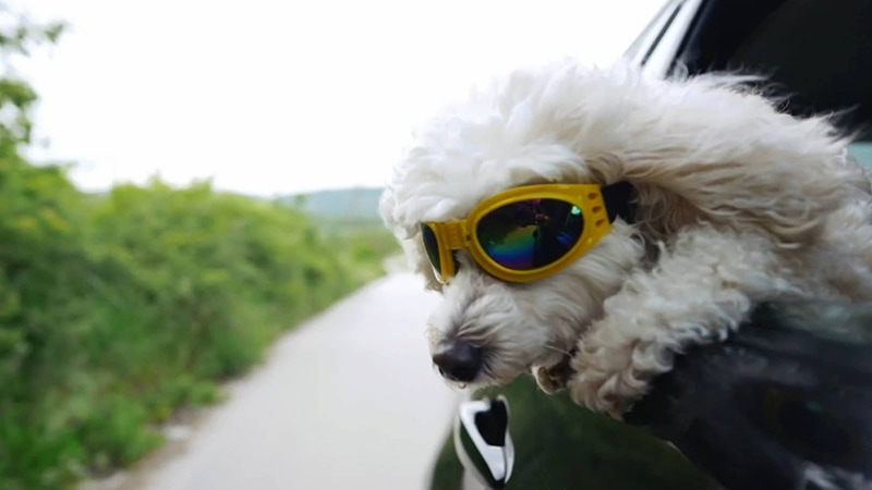 Video- Stay Cool During the Summer